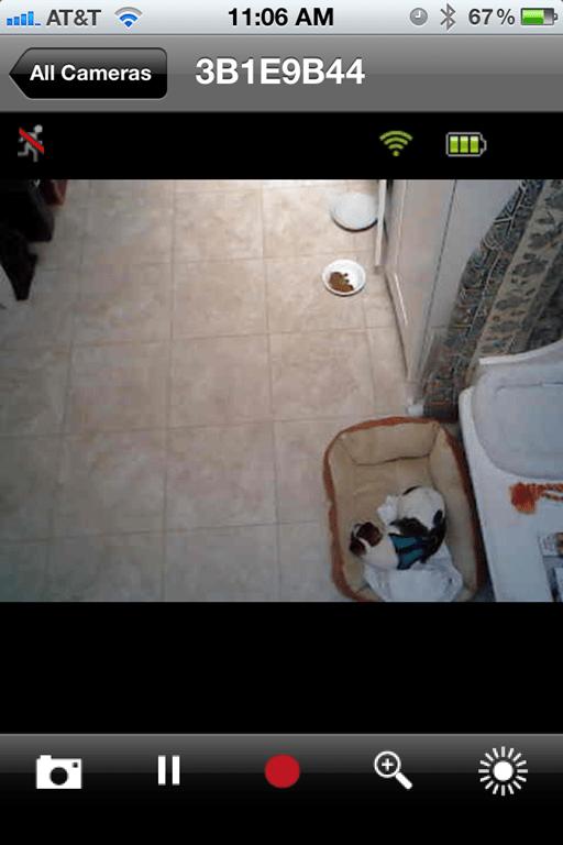 Non Destructive Dog Bed