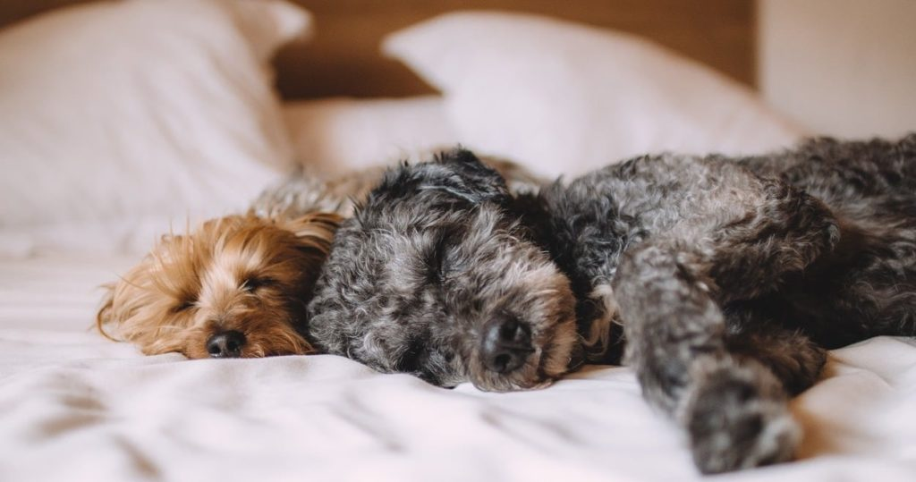 HighTechDad Sleep Tips & California Design Den Sheets - dogs sleeping